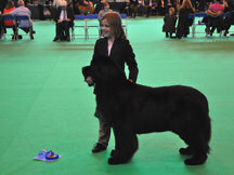 Jordan handles Clooney to a super 2nd at Crufts 2010